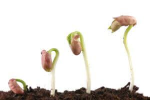 Like a bean plant in progressive stages of growth, therapy can help you grow in confidence.