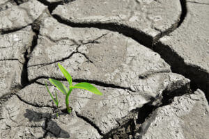 A small, green plant takes root in cracked, gray clay soil.